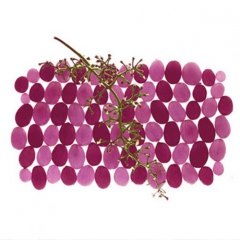 [ WINE&TIPS ] What are Tannins, Really?