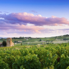 [ WINE&TIPS ] What is a Cru?